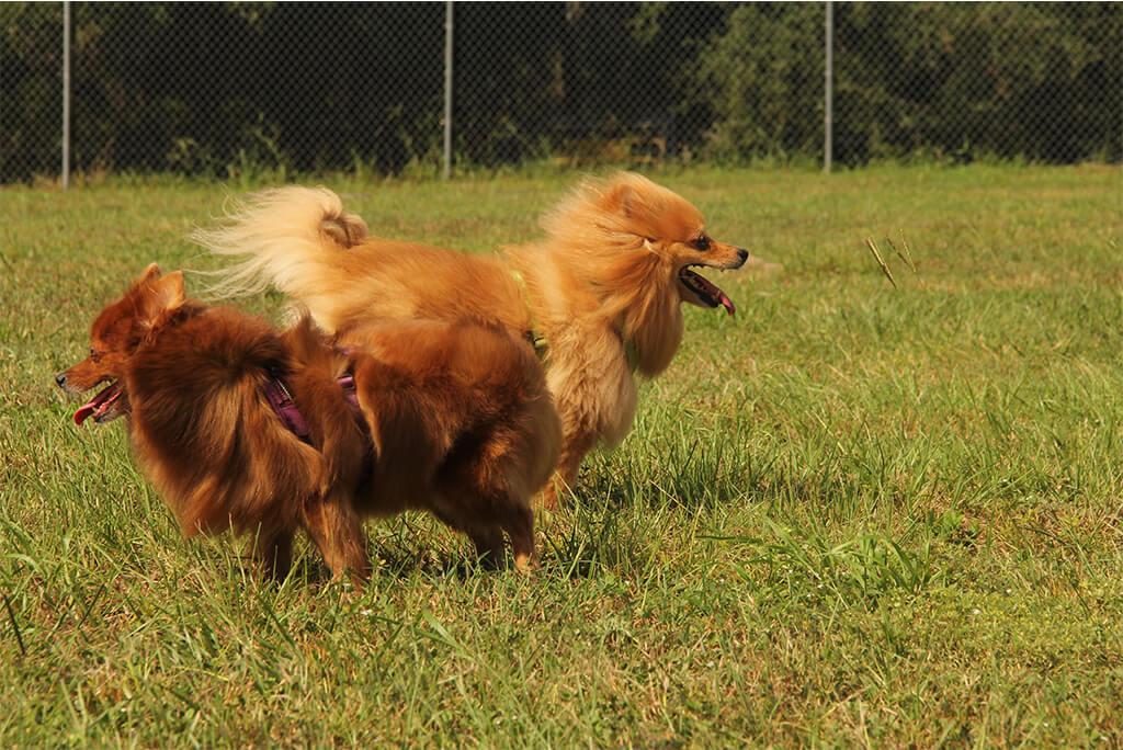 Dog's at Lady Lake Dog Park
